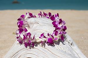Lei greetings in hawaii traditional hawaii flower lei airport service hawaiian standard lei greeting single orchid300x200g m4hsunfo